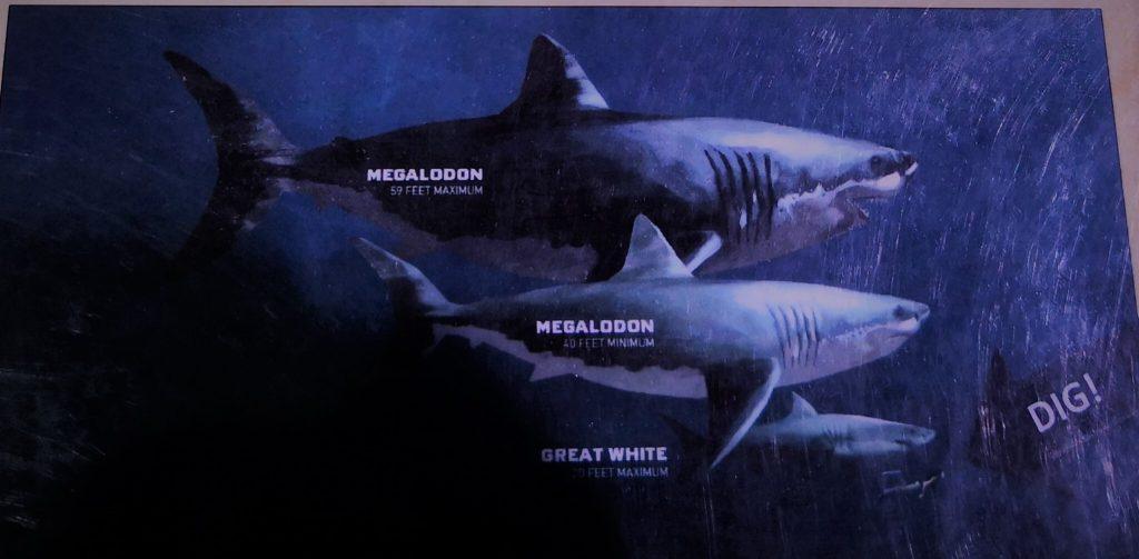 Megalodon - forhistorisk haj